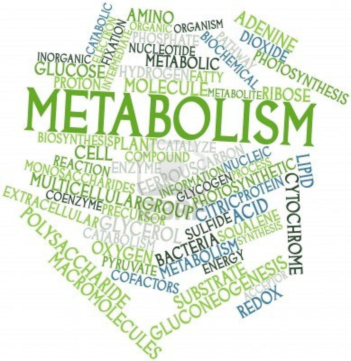 Metabolism  Wikipedia